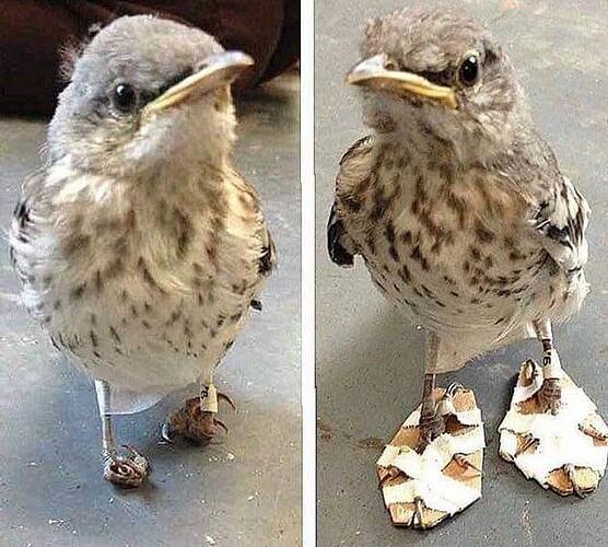 mockingbird~2